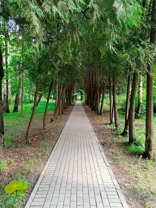 Ходьба и прогулки на свежем воздухе